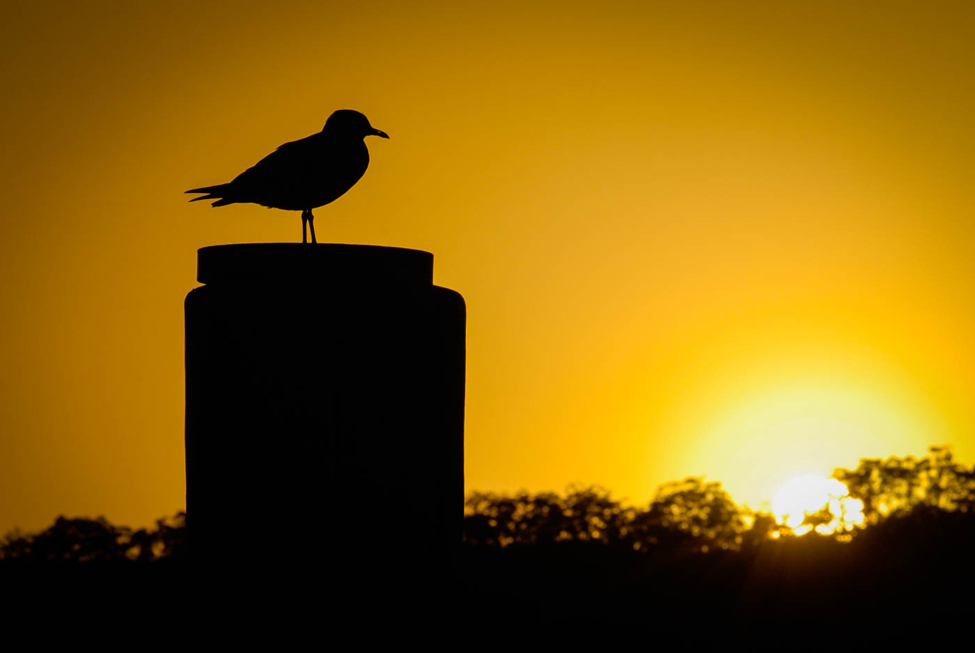 Bird at dawn on Hawkesbury River